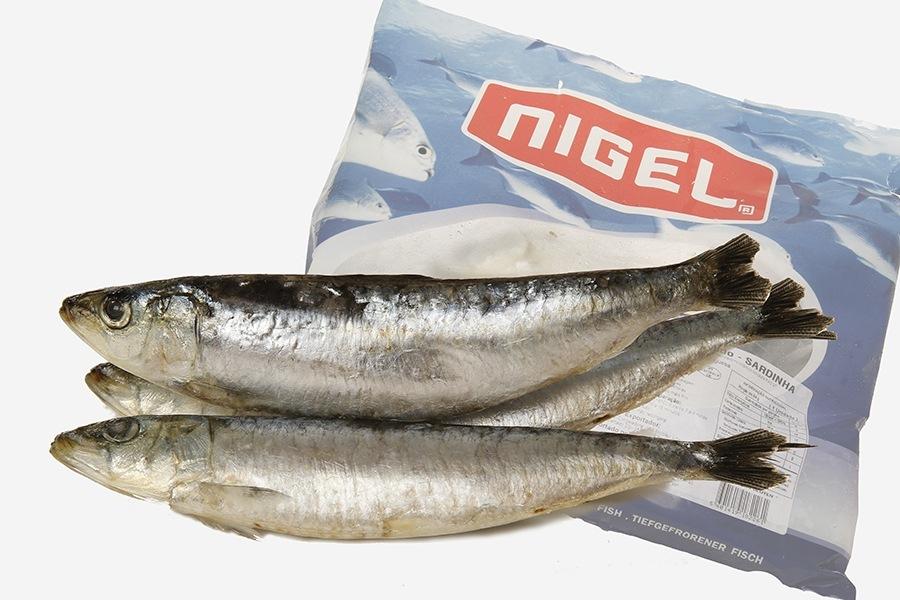 A sardinha é um peixe que pertence a família Clupeidae e tem um nome científico sardina pilchardus. Geralmente de pequenas dimensões (10-15cm de comprimento), caracterizasse por possuir apenas uma ba